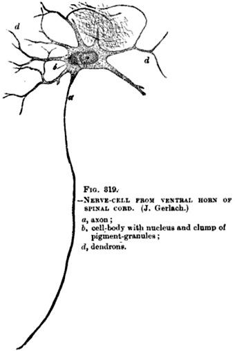 Motor syndromes for Bulbar motor neuron disease